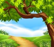 秀丽本质特异根源结构树 免版税库存照片