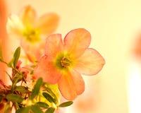 秀丽柔和的花 免版税库存图片
