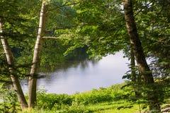 秀丽森林湖反映夏天 库存图片
