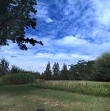 秀丽森林自然天空云彩 免版税库存图片