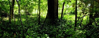 秀丽森林 免版税库存照片