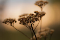 秀丽植物 免版税库存照片