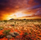 秀丽沙漠日落 免版税库存照片