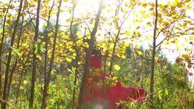 秀丽浪漫微笑的少妇剪影长的红色礼服的在日落的森林里 美丽的愉快的女性 影视素材