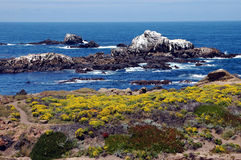 秀丽海洋 免版税库存照片