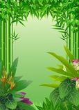 秀丽热带森林背景 库存照片