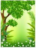 秀丽热带forestbackground 免版税库存照片