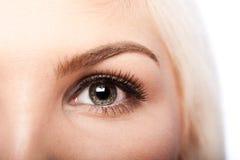 秀丽眼睛和眼眉 免版税库存照片