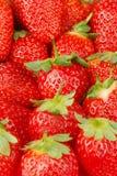 秀丽红色草莓 库存图片