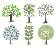 秀丽结构树 免版税库存照片