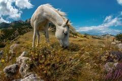 秀丽自然与白马的山风景 免版税库存照片