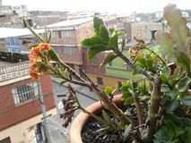 秀丽自然植物 库存照片