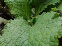 秀丽自然植物 库存图片