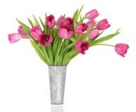 秀丽花粉红色郁金香 库存图片