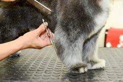 秀丽诊所的似犬美发师与狗 免版税库存照片