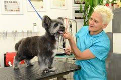 秀丽诊所的似犬美发师与狗 库存照片