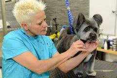 秀丽诊所的似犬美发师与狗 图库摄影