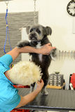 秀丽诊所的似犬美发师与狗 免版税图库摄影