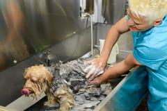 秀丽诊所的似犬美发师与狗 免版税库存图片