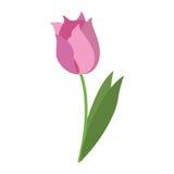 秀丽郁金香植物群自然 库存例证
