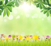 秀丽绿色叶子和花在草春季 库存图片