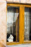秀手旁观和看窗口的猫 免版税库存照片