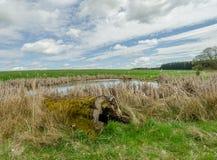 私有池塘和腐烂的树与青苔 库存图片