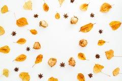 秋叶、干玫瑰和茴香的秋天概念在白色背景 平的位置,顶视图 免版税库存图片