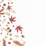 秋叶、干花和在白色背景隔绝的杉木锥体框架  平的位置,顶视图,拷贝空间 免版税库存照片