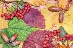 秋叶、红色莓果和橡子 背景蓝色云彩调遣草绿色本质天空空白小束 免版税库存图片