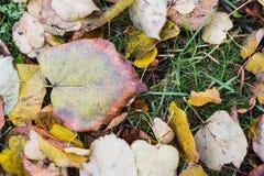 秋叶、草、地面和橡子 免版税库存图片