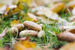 秋叶、草、地面和橡子 库存图片