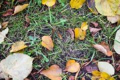 秋叶、草、地面和橡子 免版税库存照片