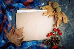 秋叶、莓果、野玫瑰果和杉木锥体在桌上 秋天背景复制空间 库存照片