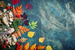 秋叶、蘑菇和莓果在黑暗的背景 秋天背景复制空间 库存照片