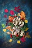 秋叶、蘑菇和莓果在黑暗的背景 秋天背景特写镜头上色常春藤叶子橙红 免版税库存图片