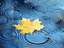 秋叶。 免版税库存照片