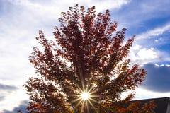 秋叶临近红色日落结构树 库存图片
