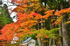 秋叶五颜六色的渐进性 图库摄影