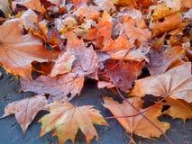 秋叶作为在混凝土的一个框架 免版税库存照片