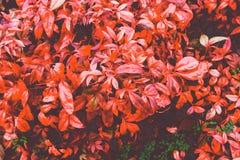 秋叶光栅背景 图库摄影