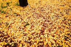秋叶光栅背景 库存照片
