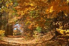 秋叶分支形成隧道,曼斯菲尔德凹陷, Connec 图库摄影