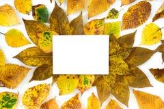 秋叶华丽与白色拷贝空间卡片 免版税库存图片