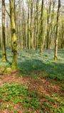 秋叶和会开蓝色钟形花的草在森林里 库存照片