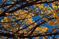 秋叶和分支在明亮的太阳下 免版税库存照片