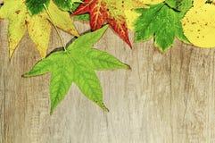 秋叶和大绿色叶子在木背景 图库摄影