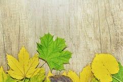 秋叶和大绿色叶子在木背景 免版税库存照片