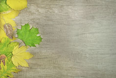 秋叶和大绿色叶子在木背景 库存图片