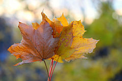 秋叶和抽象背景 库存照片